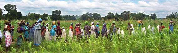 FGM walk